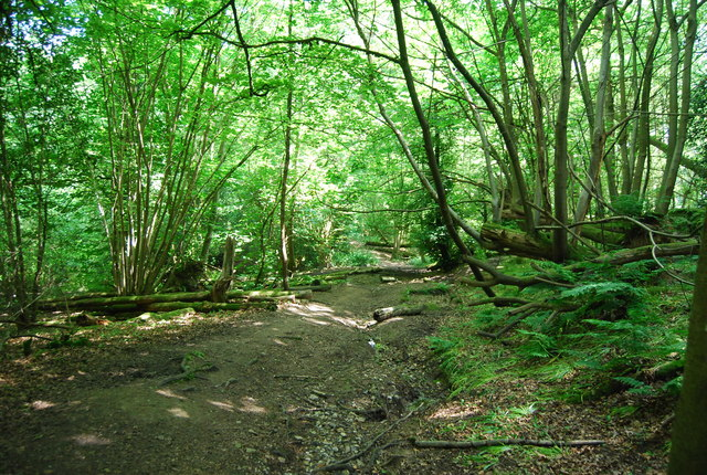 Dry channel in Salmon Wood