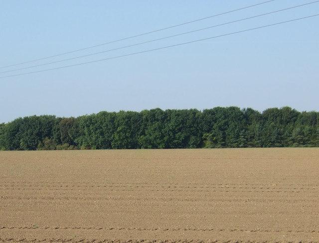 Farmland towards Stone Pit Plantation