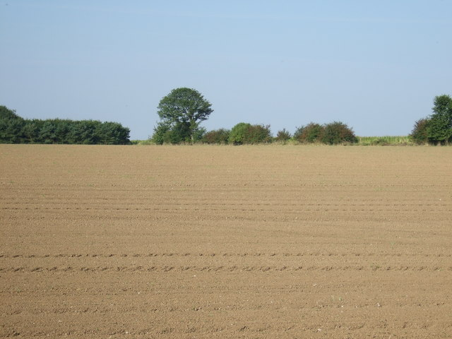 Farmland, Middle Field