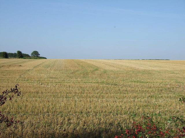 Stubble field, East Field