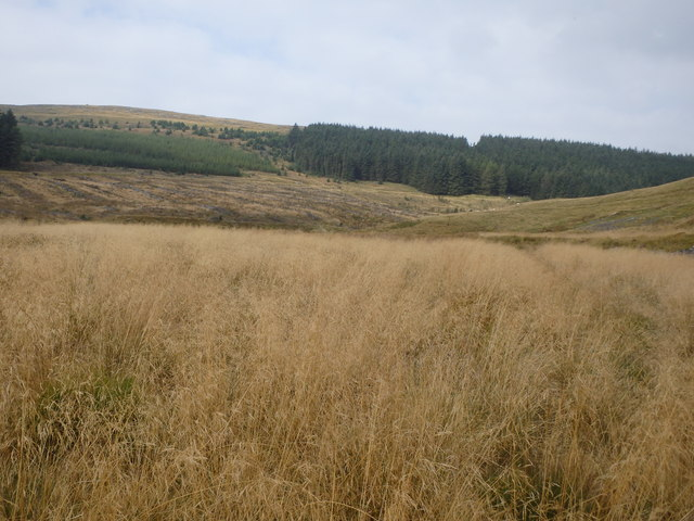 Tall Grass, Nant Y Moch