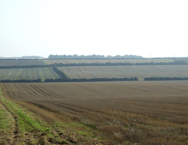 Wolds farmland, East Field