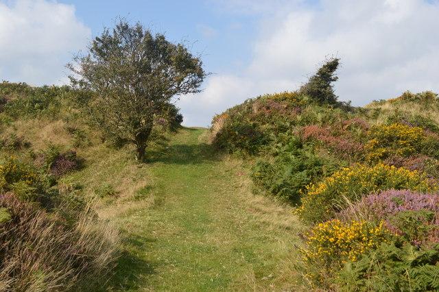 Autumn at Castle-an-Dinas