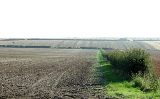 Wolds farmland and hedgerow