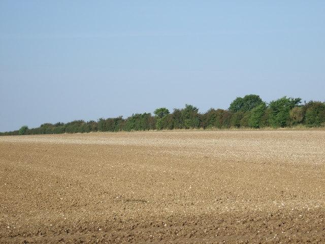 Farmland towards Woldgate Roman Road
