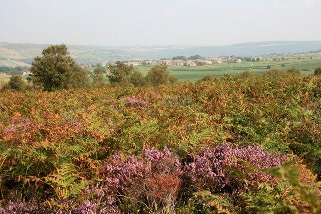Whitwell Moor
