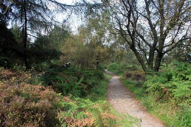 Path on Whitwell Moor