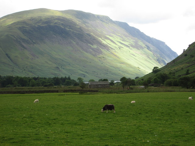 Grazing sheep, Wasdale Head