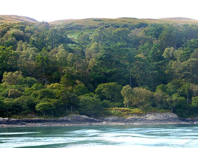 Wooded coast of Jura