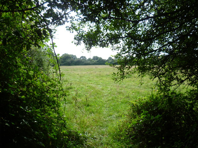 On Shortwood Common
