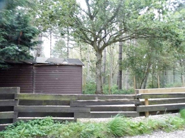 Woods by Woodside Lane
