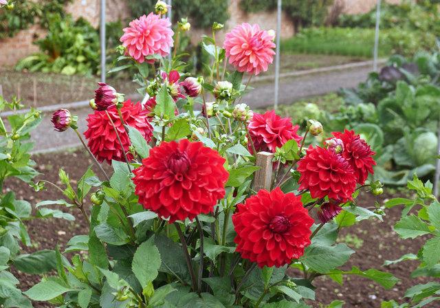 Tyntesfield flowers 1