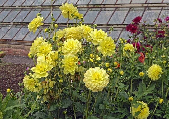 Tyntesfield flowers 3