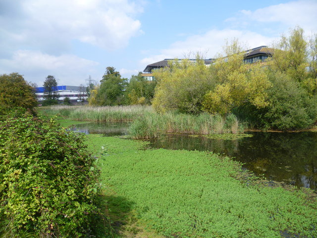 Looking across Shortwood Pond