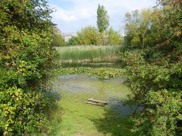 Shortwood Pond