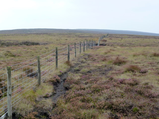 Moorland Fence at Beasley's Steady
