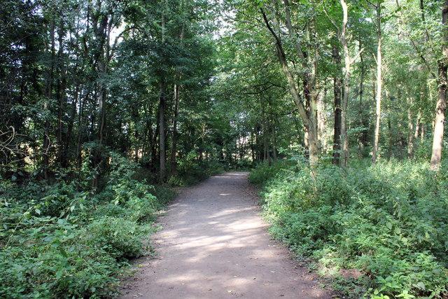 Woodland Walk at Attingham Park