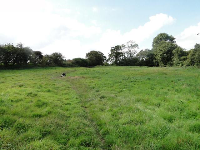 Footpath across meadowland