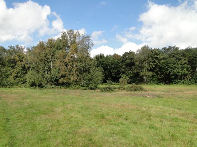 Trees near Stakebridge Beck
