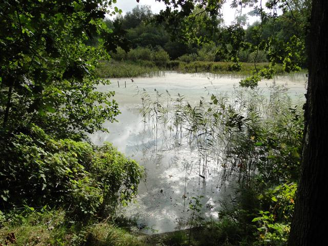Scottow Pond