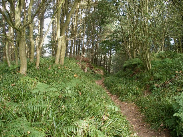 Track, Raincliffe Woods