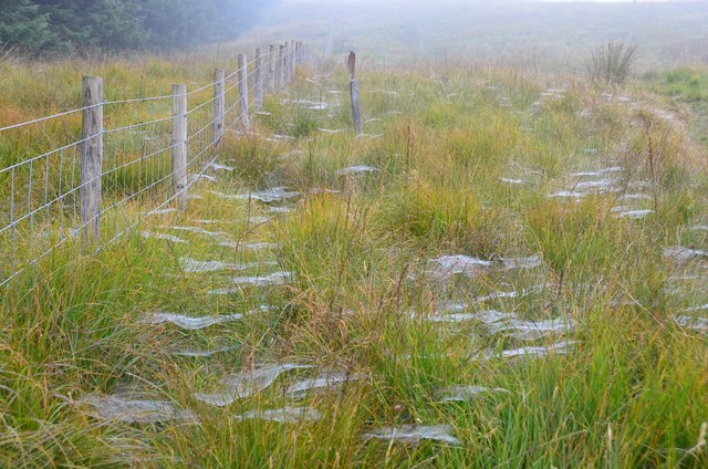 Spiders' webs on Annanhead Hill