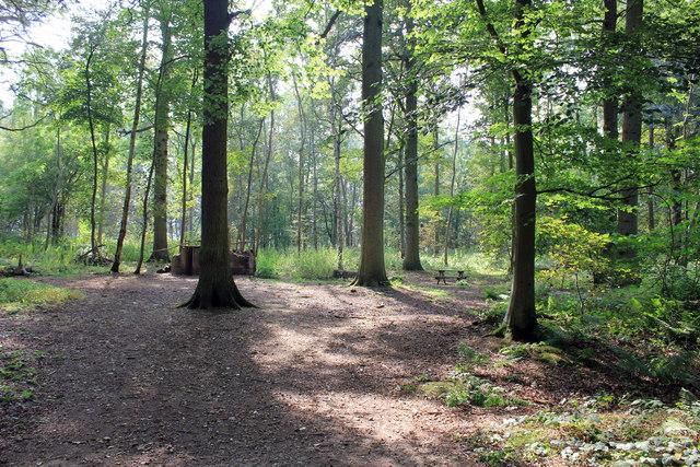 Tobruck Plantation, Attingham Park
