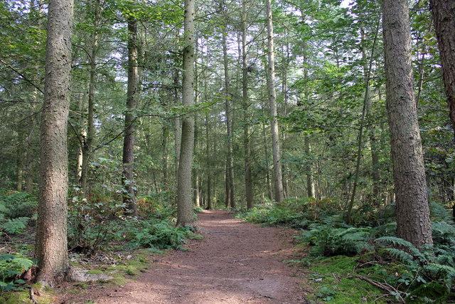 New Plantation, Attingham Park