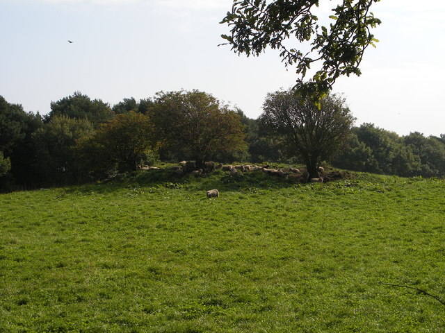 Sheep on tumulus