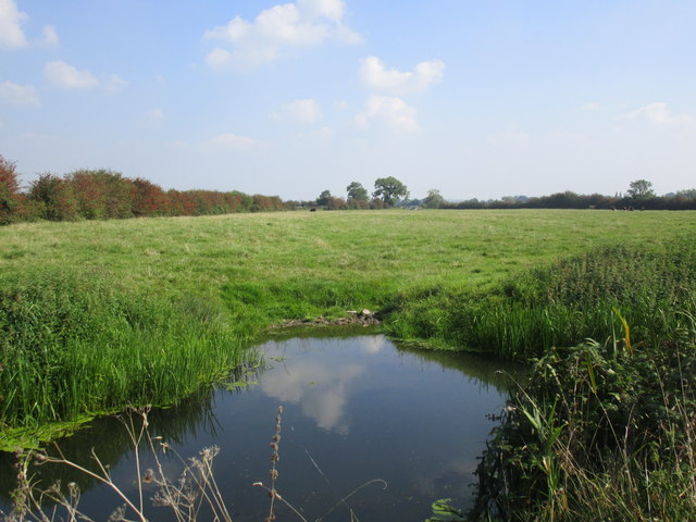 Cattle drinking area, Pillrow Wall Rhyne