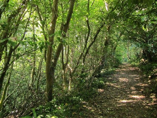 Path, Widdicombe