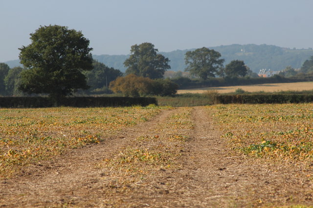 Field south of Leigh