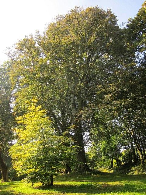 Trees near Widdicombe House