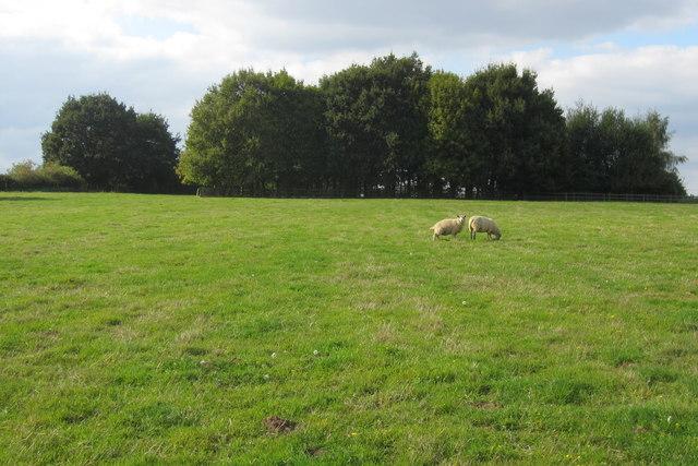Copse by Church End Farm