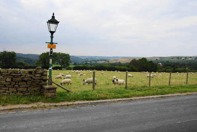 Sheep in Goathland