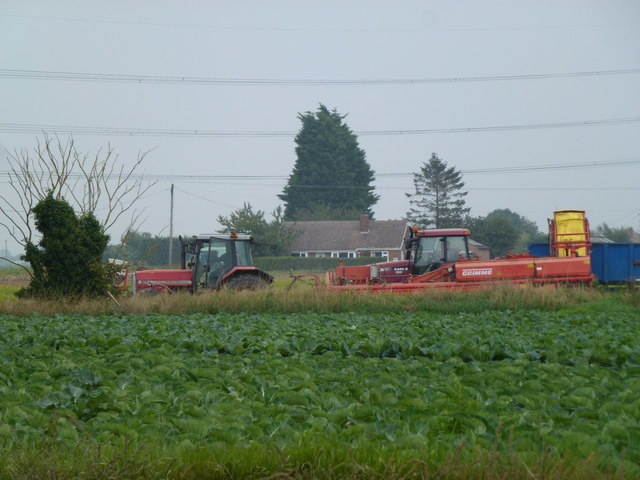 Harvesting potatoes on Gosberton Marsh