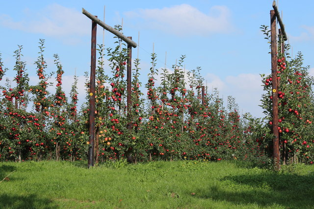 Orchard by Stocks Farm