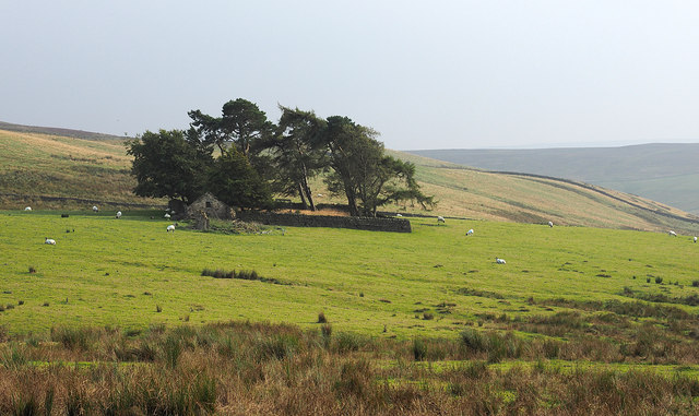 Trees in enclosure with ruin outside