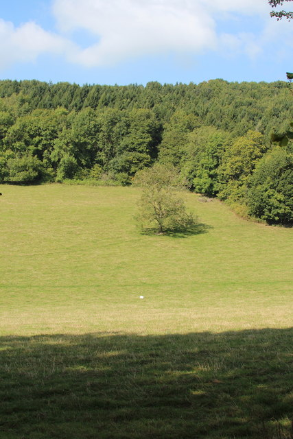 Field by Hallhouse Coppice