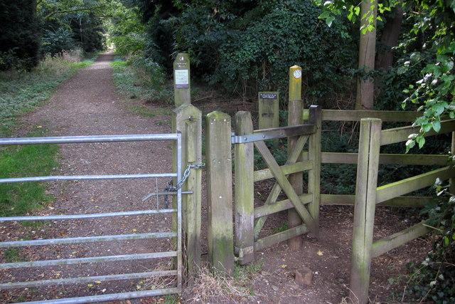 Path through Chicksands Wood