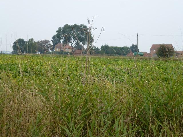 Belton Farm, Between Gosberton and Sutterton