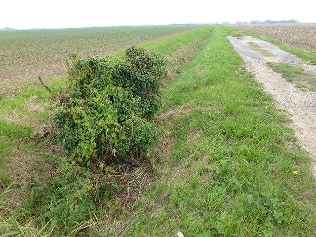 Farmland track of Hipper Lane, Wigtoft