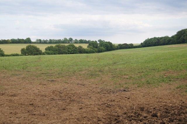 Fields south of Berrydown Copse