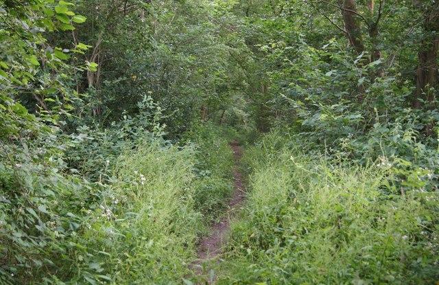 Footpath to Waltham Lane