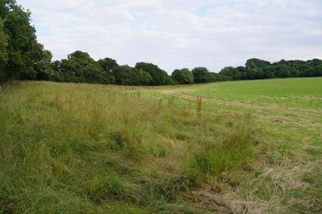 Fields by Waltham Lane