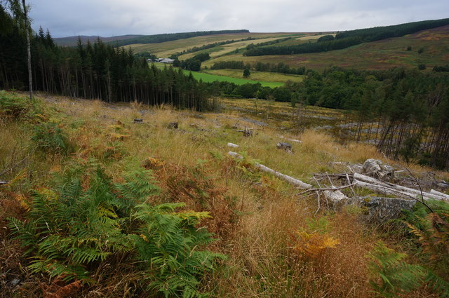 Cleared area, Tummel Forest