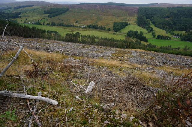 Cleared felled area, Big Wood