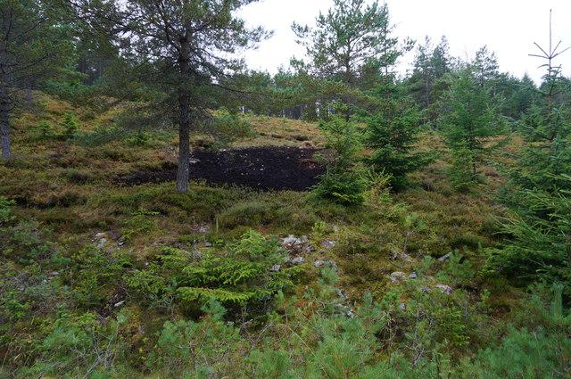 Deer rutting area