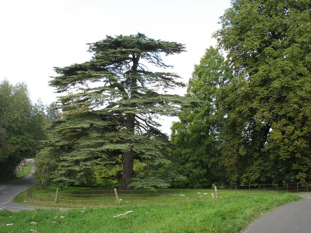 Trees in the grounds of Talton House