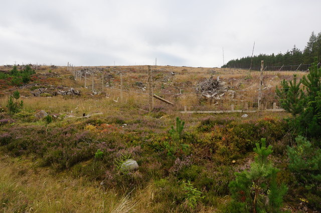 Replanted area, Tummel Forest
